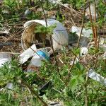 Schade, denn solche wilden Müllkippen sieht man leider noch häufiger in Rumänien