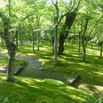 Der Moosgarten beim Kunstmuseum Hakone ist einfach nur traumhaft