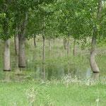 Die Bäume stehen hier im Wasser