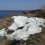 Schneereste am Peipsi Järv - der Winter ist gerade erst auf dem Rückzug