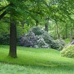 mit prächtig blühenden Rhododendren-Büschen