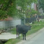 Diverse Tiere queren schon mal die Straße