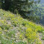 Und noch mehr blühende Bergwiesen