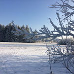 Winter-Wonderland am Federsee