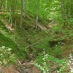 Wildromantisch führt der Weg durch das Kirnbachtal hinauf auf die Höhen des Schurwaldes