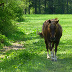 Einige tierische Begegnungen am Wegesrand