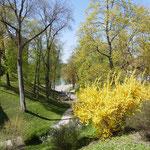 Der Schlosspark steht in der Frühlingsblüte