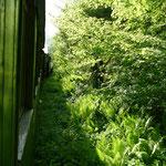 Durch's wildromantische Wassertal rattert die Schmalspurbahn