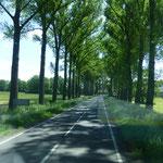 Allenstraße säumen unseren Weg nach Krakau