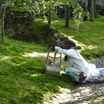 Das Moos wird in mühevoller Handarbeit von jedem störenden Blättchen befreit
