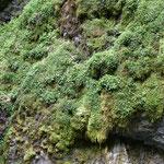 Beeindruckend sind die Felsen mit ihrem Moos-Bewuchs