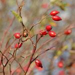 Schätze des Herbstes