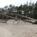 Wild durcheinandergewürfelt die Bäume, denen es den Boden unter den Wurzeln weg spült