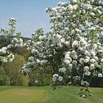 Blütenpracht am Golfplatz Hetzenhof