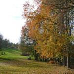 Herbst-Impressionen am Golfplatz