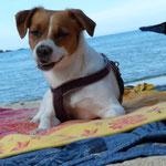 beach time # Korsika