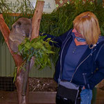 Rita war sofort in diesen putzigen Koala verliebt