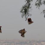 Leider kennen wir den Namen dieser Vögel nicht.....