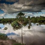 ...die Vegetation des Chaco ist schon sehr vielfältig...