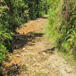 ....der Weg war extrem steil und eher wie ein Bachbett.....