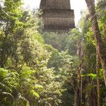 ....Tikal liegt heute mitten im Dschungel.....