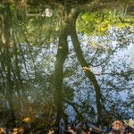 ...direkt ausserhalb ein toller Park mit tollem Bachlauf...