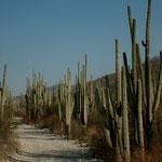 Fahrt durch die Biosfera Tehuacan-Cuitlan