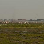 ...Flamingos sind die Hauptattraktion der Touristen...