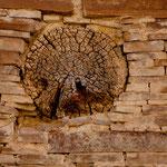 vor 1.000 Jahren gebaut und so präzise wurden die Baumstämme ins Mauerwerk eingepasst