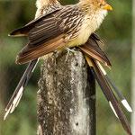 ...und bekamen täglich Besuch von den verschiedensten Vögeln...