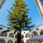 ...eine riesige 200 Jahre alte Aureliatanne (stammt aus Chile). Um diese wurde das Gebäude gebaut...