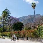 Radltour in Ajijic bei tollsten Blumenbäumen