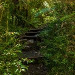...Dschungelweg...