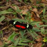 .....dabeben gab es bunte Schmetterlinge - die meisten scheu.....