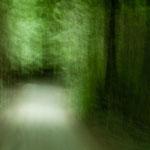 """Fahrt in den """"mystischen Regenwald"""""""