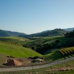 Eine Landschaft wie im Allgäu - aber mit Weinbergen