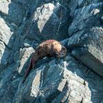 ...sogar einen Otter bekamen wir vor die Linse...