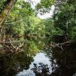 ....ein Bach im Dschungel  -voll mit Mosquitos....