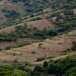 ....und die terassierten Minifelder.....