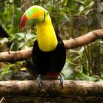 .....ein Tukan....der Wappenvogel von Belize....