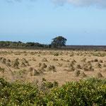 ...diese skurrile Landschaft wurde von Termiten geschaffen