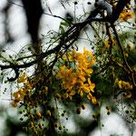 ....die ersten Bäume stehen schon in der Blüte.....