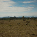 ....hier ein Savannengebiet.....