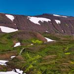 ...was immer wieder fasziniert ist das hellgrün des Mooses - das hier auf Vulkangestein wächst...