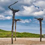 spezielle Dänische Kunst - die Bäume wachsen anders rum...