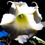 ....was für tolle Blume....