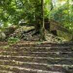 die noch nicht ausgegrabene Seite von Palenque im Dschungel....