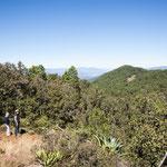 Erstaunlich wie dicht die Wälder in Mexico auf über 3.000m Höhe sind....
