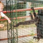 ...Affen sind doch zu menschlich...