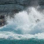 ...man erwartet dass alle Seelöwen ins Meer gespült werden...